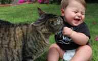 Funny Baby Cats 6 Free Wallpaper