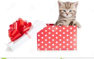 Funny Baby Gift 39 High Resolution Wallpaper