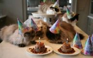 Funny Birthday Cat 10 Cool Hd Wallpaper
