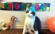 Funny Birthday Cat 13 Wide Wallpaper