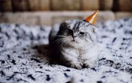 Funny Birthday Cat 17 Background Wallpaper