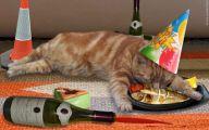 Funny Birthday Cat 18 Wide Wallpaper