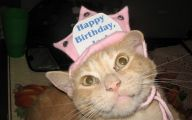 Funny Birthday Cat 19 Desktop Wallpaper