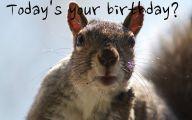 Funny Birthday Cat 21 High Resolution Wallpaper