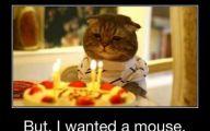 Funny Birthday Cat 22 Desktop Wallpaper