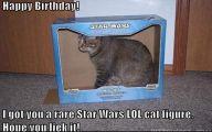 Funny Birthday Cat 29 High Resolution Wallpaper