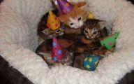 Funny Birthday Cat 31 Free Hd Wallpaper