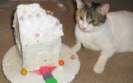 Funny Birthday Cat 32 Desktop Wallpaper