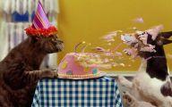 Funny Birthday Cat 9 Free Hd Wallpaper