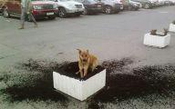 Funny Bones For Dogs 30 Desktop Background