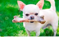 Funny Bones For Dogs 34 Background Wallpaper