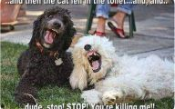 Funny Bones For Dogs 35 Cool Hd Wallpaper