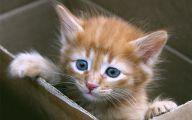 Funny Boy Cat Names 11 Free Hd Wallpaper