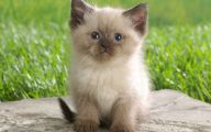 Funny Boy Cat Names 26 Desktop Background