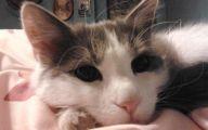 Funny Boy Cat Names 30 Wide Wallpaper