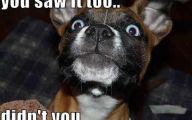 Funny Boy Dog Names 10 Cool Wallpaper
