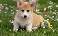 Funny Boy Dog Names 29 Widescreen Wallpaper