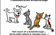 Funny Cartoon Cat 28 Widescreen Wallpaper