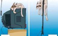 Funny Cartoon Cat 35 Desktop Background