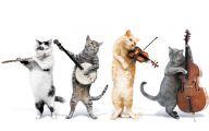 Funny Cartoon Cat Pictures 1 Hd Wallpaper