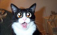 Funny Cartoon Cat Pictures 11 Wide Wallpaper