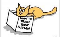Funny Cartoon Cat Pictures 13 Desktop Wallpaper