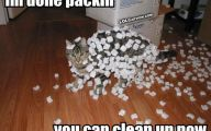 Funny Cartoon Cat Pictures 15 Hd Wallpaper