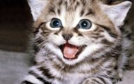 Funny Cat Blog 1 High Resolution Wallpaper