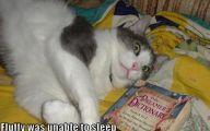 Funny Cat Blog 13 Background