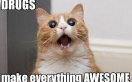 Funny Cat Blog 14 Wide Wallpaper