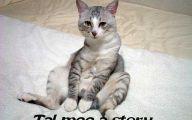 Funny Cat Blog 17 Desktop Background