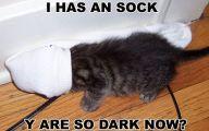 Funny Cat Blog 19 Cool Wallpaper