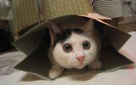 Funny Cat Blog 21 Desktop Wallpaper