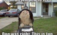 Funny Cat Blog 22 Cool Wallpaper