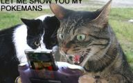 Funny Cat Blog 26 High Resolution Wallpaper