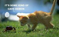 Funny Cat Blog 28 Background Wallpaper