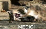 Funny Cat Blog 3 Cool Wallpaper