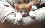 Funny Cat Blog 31 Wide Wallpaper