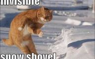 Funny Cat Blog 32 Free Wallpaper