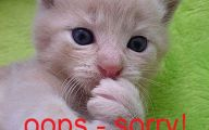 Funny Cat Blog 33 Desktop Background