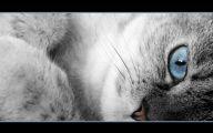 Funny Cat Blog 4 Desktop Wallpaper
