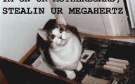 Funny Cat Blog 5 Cool Hd Wallpaper