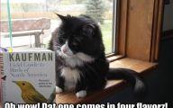 Funny Cat Books 1 Widescreen Wallpaper