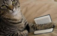 Funny Cat Books 10 Wide Wallpaper