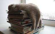 Funny Cat Books 11 Cool Hd Wallpaper