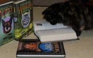 Funny Cat Books 13 Widescreen Wallpaper