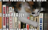 Funny Cat Books 16 Free Wallpaper