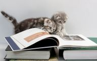 Funny Cat Books 17 Wide Wallpaper