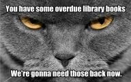 Funny Cat Books 18 Desktop Background