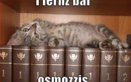 Funny Cat Books 19 Cool Hd Wallpaper